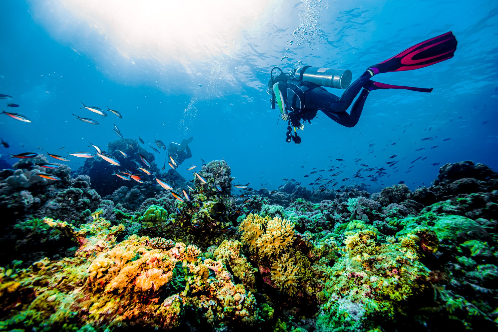 Scuba Diving Jamaica Coral Reef Exploring