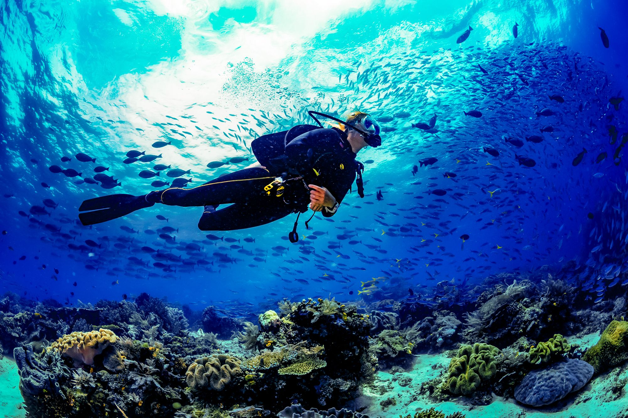 Scuba Diving Jamaica Over Reef