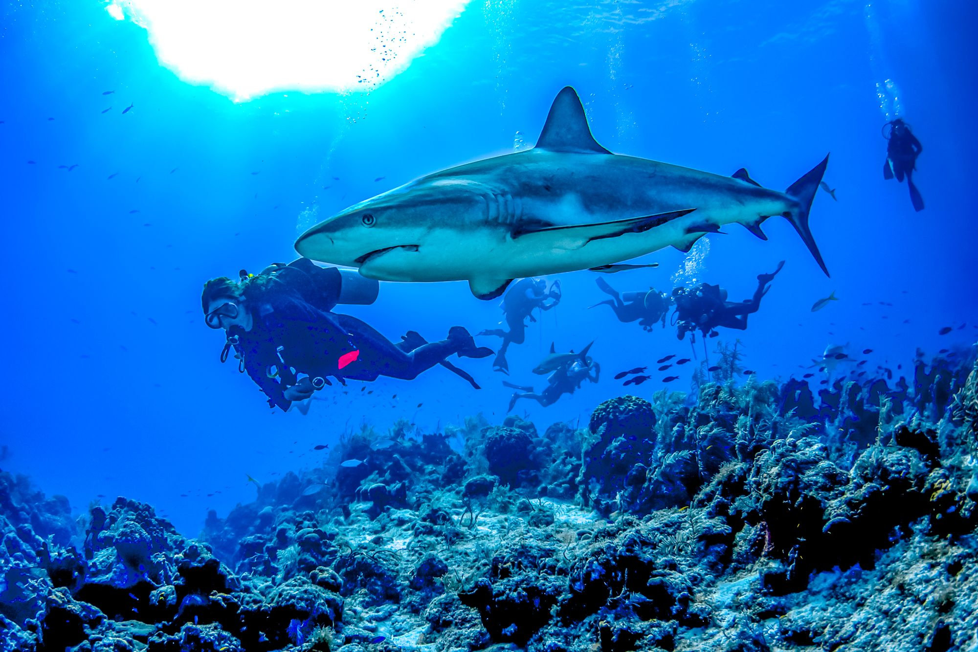 Shark Diving Turks Caicos