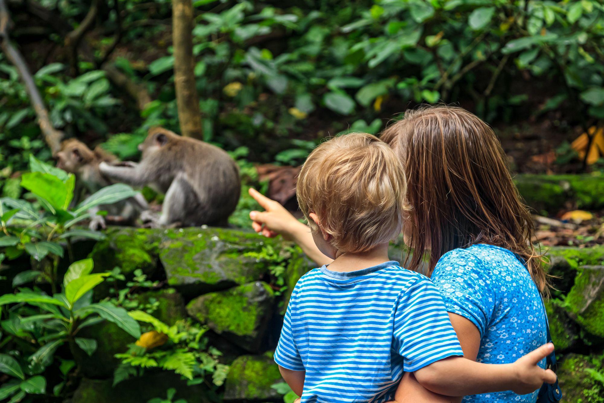 Green Monkeys Mom Kid Wildlife